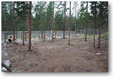 Huskyfarm schweden